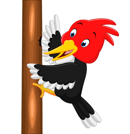 Woodpecker bird cartoon