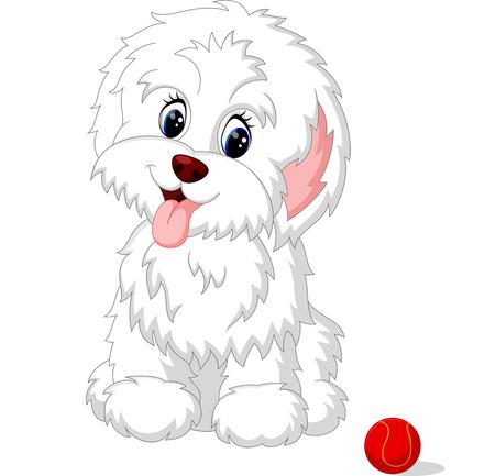lapdog: Cute white lap-dog puppy posing