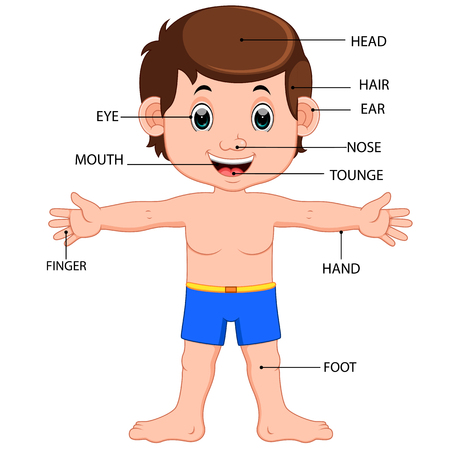 boy body parts diagram poster Illustration