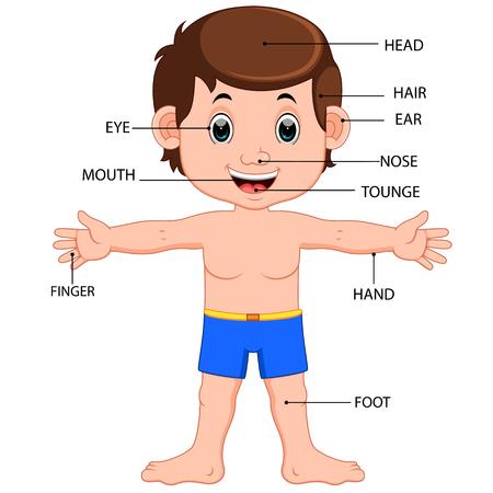 garçon affiche les parties du corps de diagramme