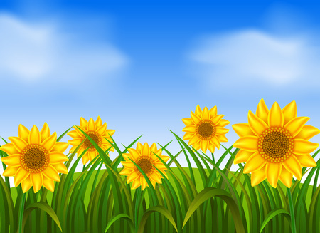 Background scene with sunflowers in garden