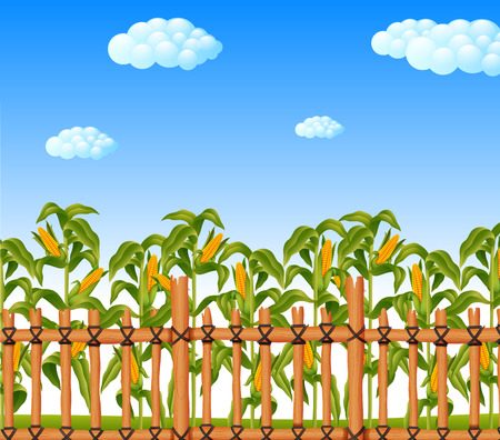 young green corn field in agricultural garden Stockfoto - 101798510