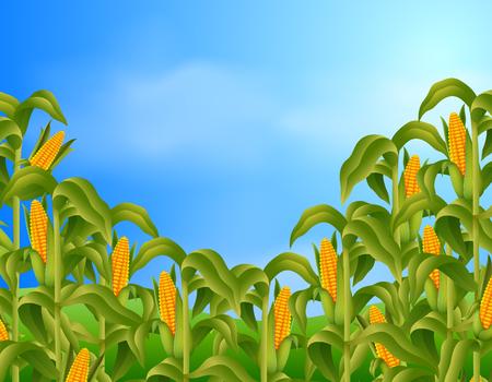 Farm scene with fresh corn