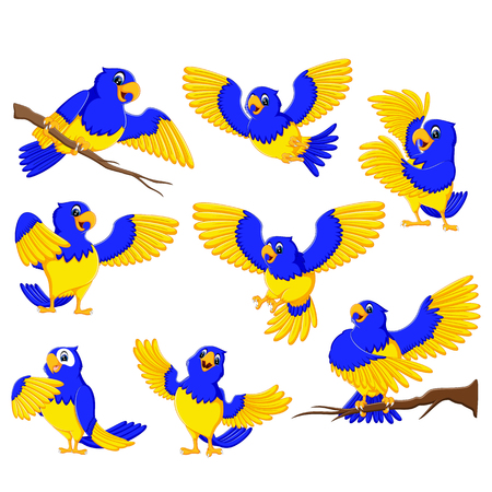 the dashing parrots with the gold accent