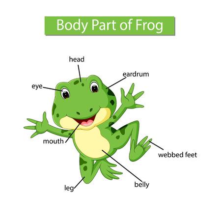 Diagram showing body part of frog Çizim