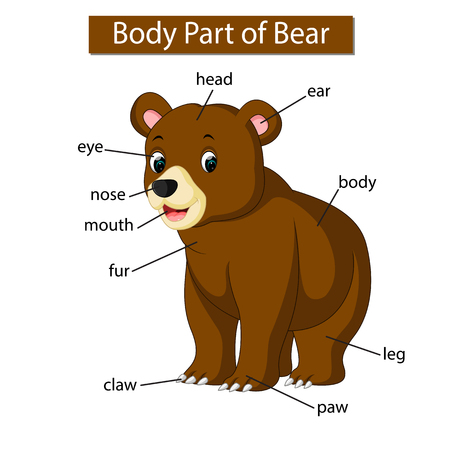 Diagram showing body part of bear Ilustração