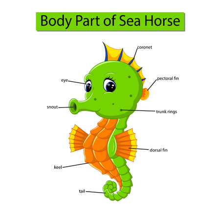 Diagram showing body part of sea horse 向量圖像