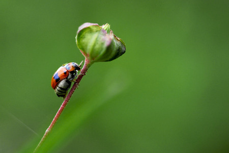 Ladybug or Adalia bipunctata on stalk of flower Stock Photo