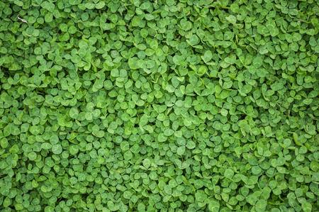 Close up von Texturen von grünen Blättern Standard-Bild - 43354824