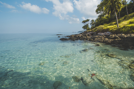 Coconut Tree, Granite Rock, Clear Sea Water and Tropical Beach Landscape