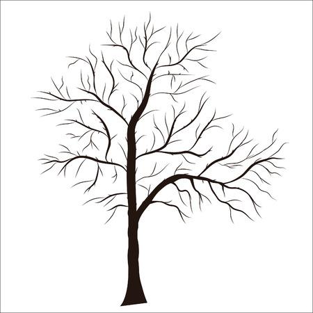 bomen zwart wit: Boom silhouet - gedetailleerde. Element voor design.
