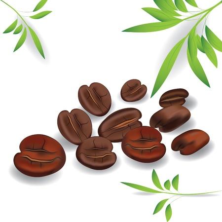 granos de cafe: Granos de caf�. Vector de calidad fotogr�fica.  Elemento de dise�o. Imagen contiene malla de degradado Vectores