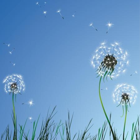 fluff: Cielo realista diente de Le�n hierba azul. Ilustraci�n vectorial. Vectores