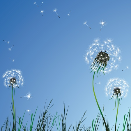 flowers fluffy: Realistic dandelion grass blue sky. Vector illustration.