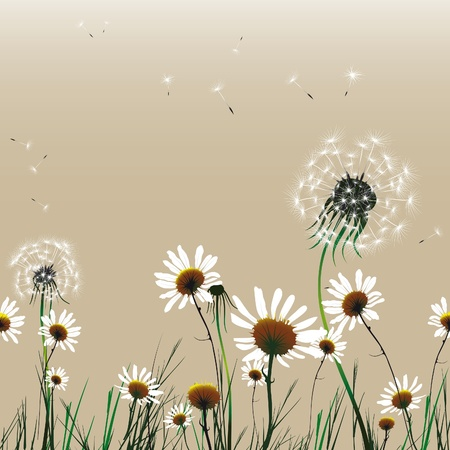 Floral seamless flower background dandelion and camomile.Vector illustration. EPS10 Stock Vector - 9379246