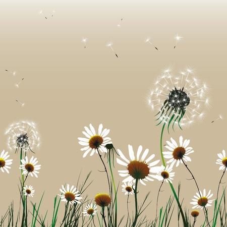 Floral seamless flower background dandelion and camomile.Vector illustration. EPS10