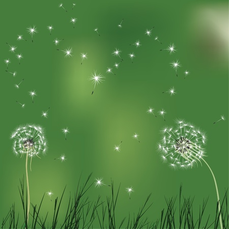 Green love background, dandelion.  heart shape seed. Summer illustration. Graphic art  Vector