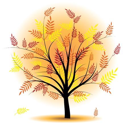 Beautiful autumn tree. Design element. Fall illustration. Stock Vector - 10014589