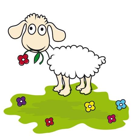 ovejita bebe: Dibujos animados de ovejas, cordero de vectores. Curioso mam�fero.
