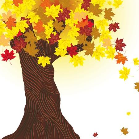 Beautiful autumn tree. Maple background. Design element. Fall illustration. Vector