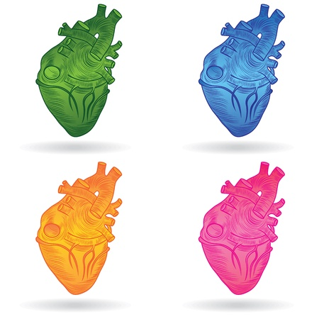 Heart human body anatomy sketch set isolated on white background as medical health care symbol of cardiovascular organ  Valentine  button or icon  Vector