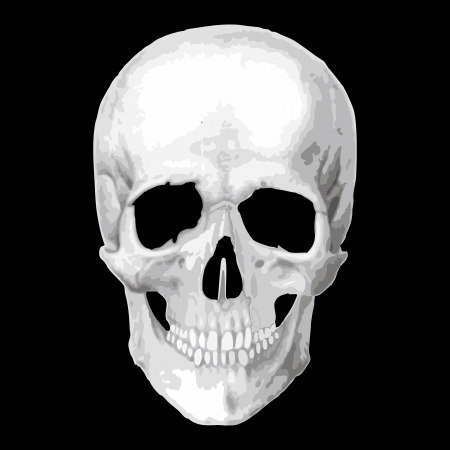 skull vector: Human skull model. Vector object scull illustration. People bone design  isolated on black background. Halloween symbol. Illustration