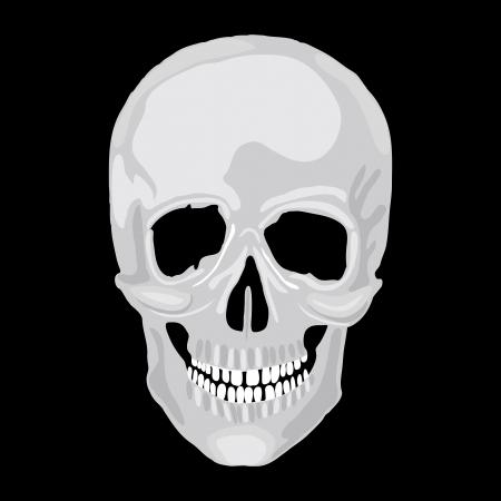 Human skull model. object scull illustration. People bone design  isolated on black background. Halloween symbol. Stock Vector - 17336333