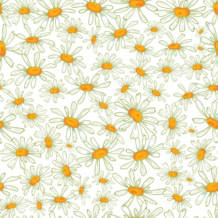 Flower camomile seamless pattern background  Daisies medical  sketch illustration  Vector