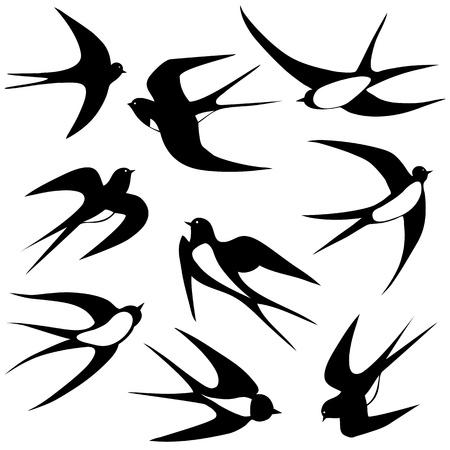 Bird zwaluw set illustratie poses op wit wordt geïsoleerd Stock Illustratie