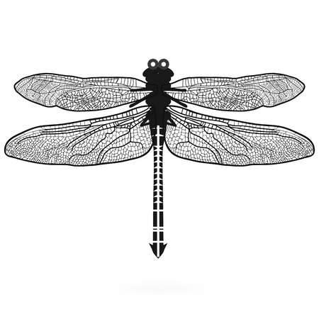Dragonfly isolated high quality illustration sign  Icon design sketch  Summer vintage logo symbol  Vector