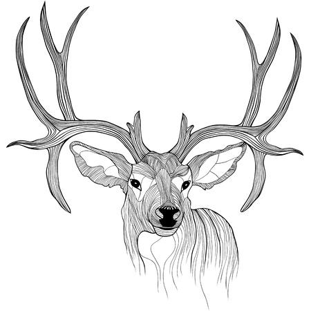 оленьи рога: Голова оленя животных иллюстрации для футболки дизайн татуировки эскиз