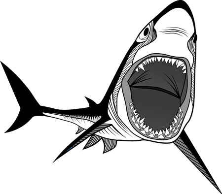 Shark fish head symbol for mascot or emblem design, logo vector illustration for t-shirt  Sketch tattoo design  Vector