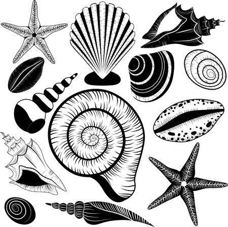 stella marina: Conchiglie collezione - set conchiglie stelle marine per la progettazione e scrapbooking epoca conchiglia stile, spirale, vongole, dollaro di sabbia, stella di mare come simboli di viaggio Vettoriali