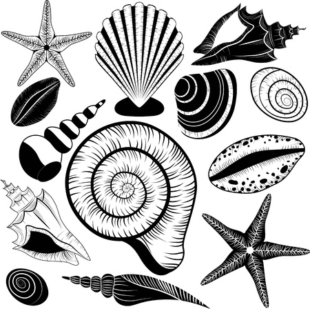 Shells collection - Seashells set starfish for design and scrapbooking vintage style conch shell, spiral, clam, sand dollar, sea star as travel symbols Vector