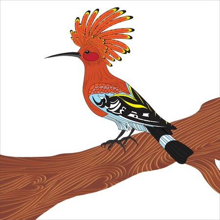 eurasian: Bird hoopoe vector illustration, Eurasian Hoopoe (Upupa epops), back profile, standing on a branch, isolated on a white background