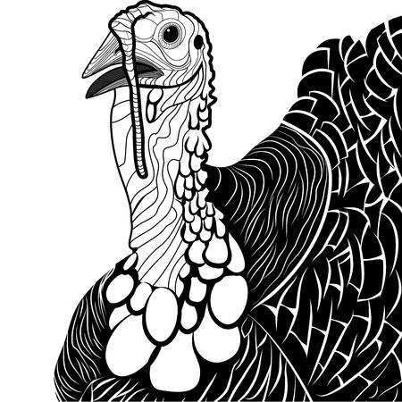 animal cock: Turchia testa di uccello come simbolo di ringraziamento per mascotte o emblema, illustrazione vettoriale per la t-shirt Sketch disegno del tatuaggio