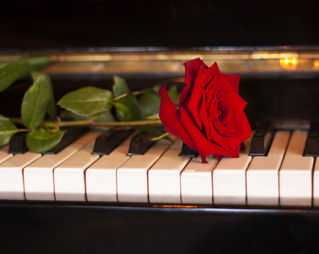 rose photo: Red rose flower on piano keyboard photo