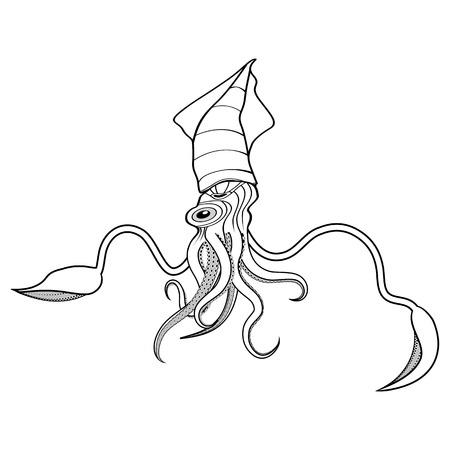 longfin: Squid ocean water animal sketch tattoo symbol illustration t-shirt vector icon. Diving design.