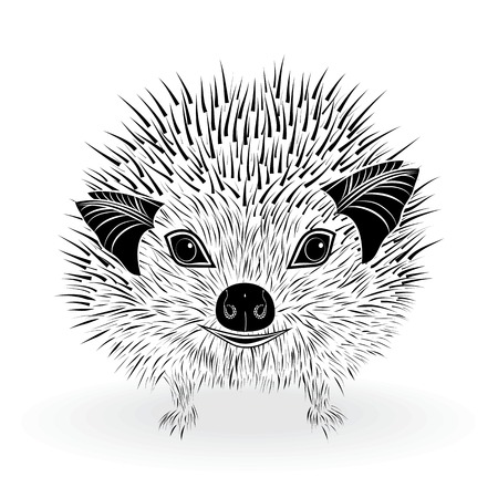 insectivorous: hedgehog head vector animal illustration for t-shirt  Sketch tattoo design