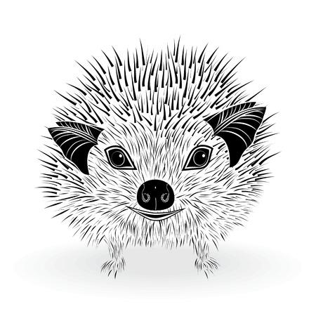 insectivorous: hedgehog head vector animal illustration for t-shirt  Sketch tattoo design