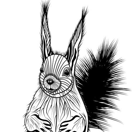 undomesticated: Squirrel head vector animal illustration for t-shirt. Sketch tattoo design.