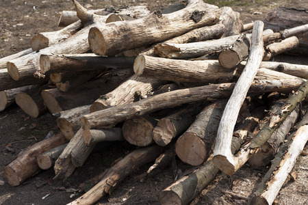 pyre: Pile of tree branch, wood stick photo