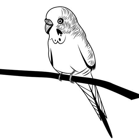 Parrot budgie bird head vector illustration for t-shirt. Sketch tattoo design.