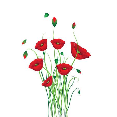 art vector: Poppy background. Flower vector. Art border pattern. Floral vintage design. Pretty cute wallpaper. Feminine filigree Illustration