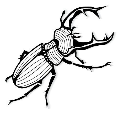 clamber: Male stag beetle, Lucanus cervus vector tattoo or for T-shirts