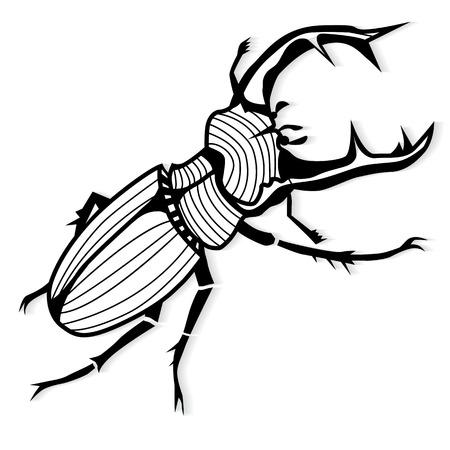 arthropoda: Male stag beetle, Lucanus cervus vector tattoo or for T-shirts