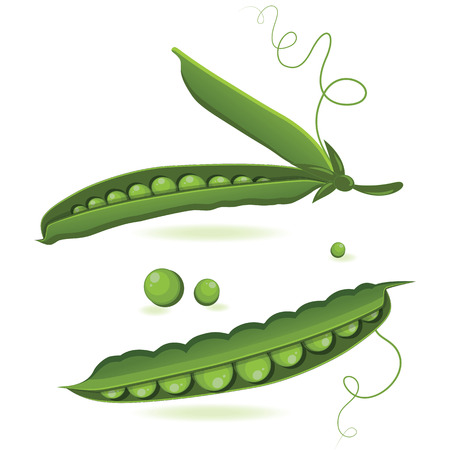 in peas: pea pods of green peas isolated illustration