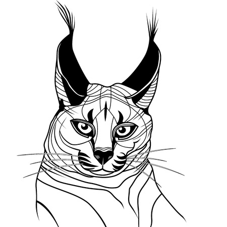 Cat caracal kitten wild animal sketch tattoo symbol illustration t-shirt vector icon. Diving design. Illustration