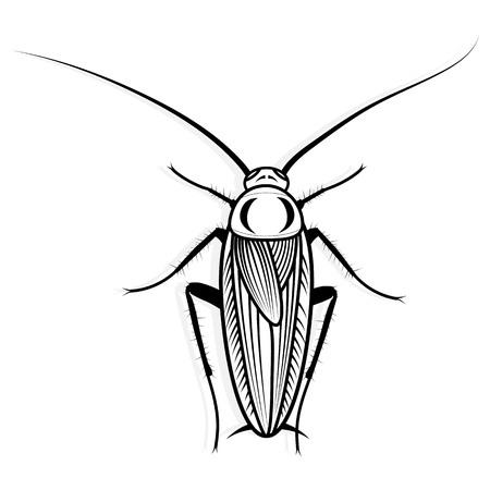 Cockroach vector design vector animal illustration for t-shirt. Sketch tattoo design. Illustration
