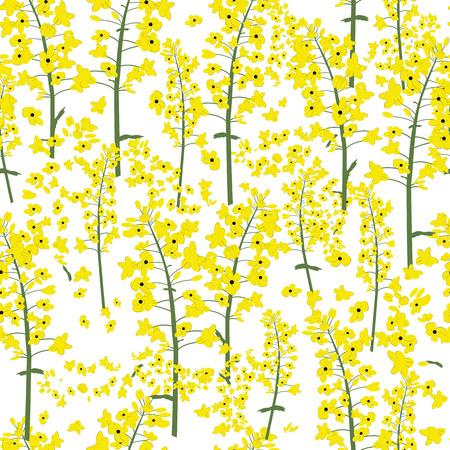 Rape canola flower seamless vector